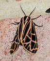Tiger Moth #3 - Apantesis