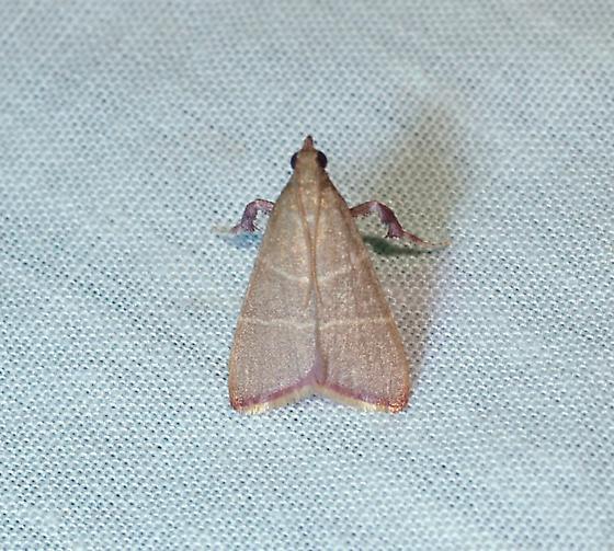 moth - Arta