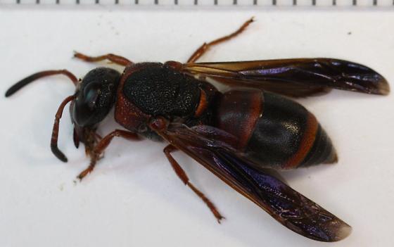 autoparasitoid wasps essay