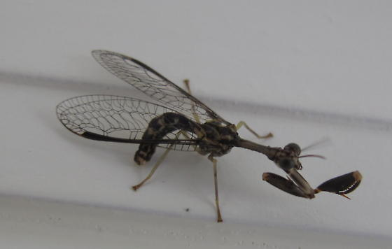 Possible Mantid