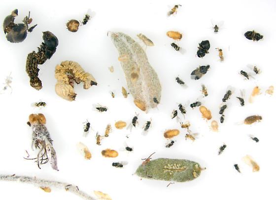 Life on Lead plant - male - female