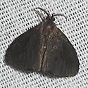 Nigrita Bagworm Moth - Hodges#441 - Cryptothelea nigrita