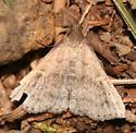 Speckled Renia Moth - 8386 - Dorsal - Renia adspergillus