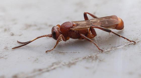 Wasp??