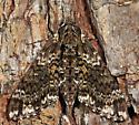 Pawpaw Sphinx - Dolba hyloeus