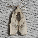 Pale Gray Bird-dropping Moth - Hodges#1014 - Antaeotricha leucillana
