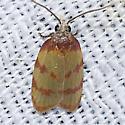 3702.2 - Sparganothis lindalinea