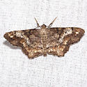 One-spotted Variant Moth - Hodges #6654 - Hypagyrtis unipunctata
