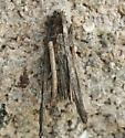 Bagworm? - Psyche casta