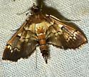 Salbia cassidalis
