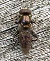 Tropidia - Chalcosyrphus nemorum