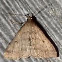 June Litter Moth