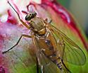 Perhaps some sort of Snipe Fly? - Rhagio - female