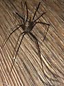 AZ Spider