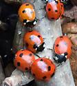 Coccinella septempunctata - Seven-spotted Lady Beetles? - Coccinella septempunctata