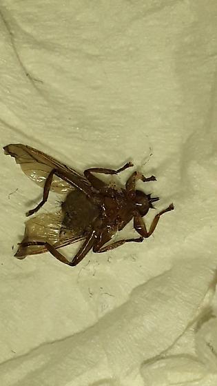Jeff and Alisa bug.
