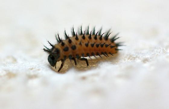 Weird Spiked Bug