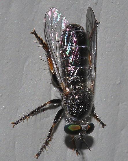 Atomosia melanopogon