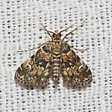Waterlily Leafcutter Moth - Hodges#4755 - Elophila obliteralis