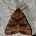 Caenurgina sp. - Caenurgina