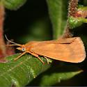 Rusty Virbia - Virbia ferruginosa