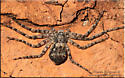 Spider sp
