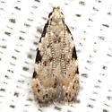 Taygete Moth - Hodges #1845 - Taygete gallaegenitella