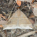 Litter Moth - Parallelia bistriaris
