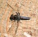 Which dragonfly, please? - Ladona deplanata