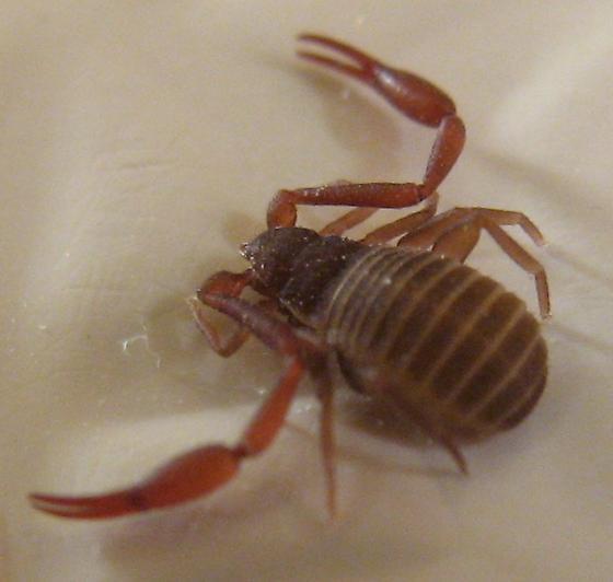 Tiny crab-like bug found in bathtub