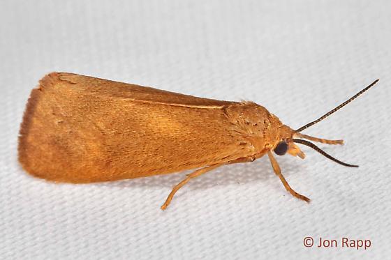 Unidentified Moth (118) - Virbia