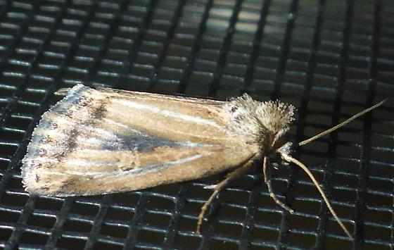 ID Request -- spring moth