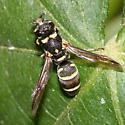 Mason wasp, possibly Stenodynerus sp. - Parancistrocerus texensis