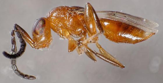 tiny wasp - female