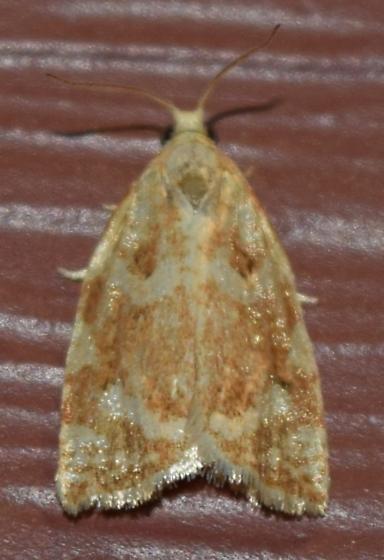 Moth ID request