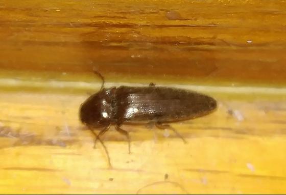 Stairbug