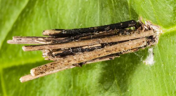 Psyche casta (Bagworm moth) larvarium - Psyche casta