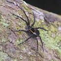 Unknown Louisiana Spider - Dolomedes