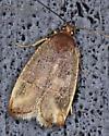 Moth - Psilocorsis