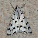 No. 26 Spotted Peppergrass Moth (Eustixia pupula)--4794? - Eustixia pupula