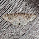 Unadorned Carpet Moth - Hydrelia inornata