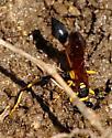 Black and Yellow Mud Dauber with a yellow waist - Sceliphron caementarium