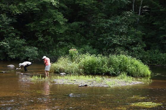Wading buggers