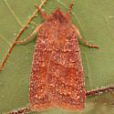 Pyreferra ceromatica