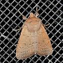 Moth - Homorthodes communis