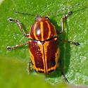 ID for a colorful beetle? - Cryptocephalus castaneus