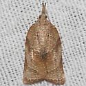 Omnivorous Platynota Moth - Hodges#3745 - Platynota rostrana