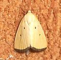 Black-bordered Lemon Moth - Hodges#9044 - Marimatha nigrofimbria