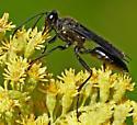 Great Black Wasp (Sphex pensylvanicus)? - Sphex pensylvanicus - male