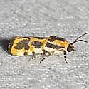 Common Spragueia - Hodges#9127 - Spragueia leo